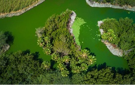Bubali wetlands – Bird Sanctuary – Source: Aruba.com